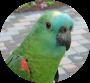 Polly2a2